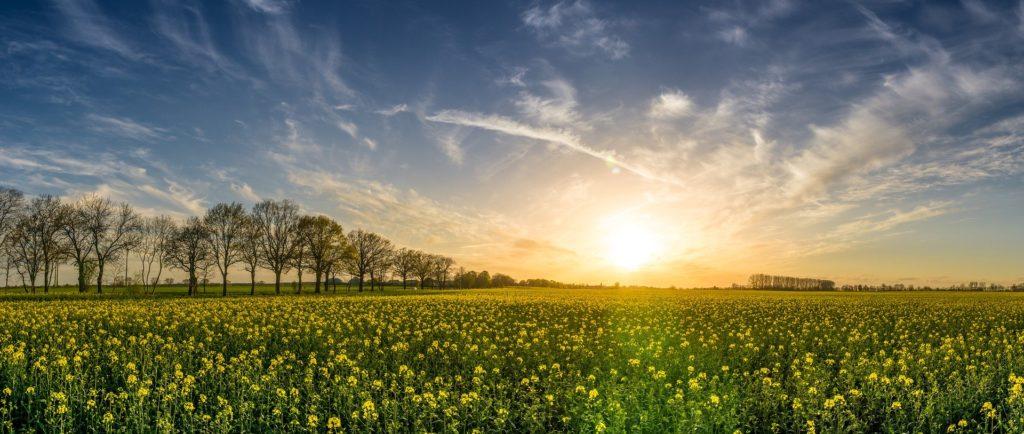 Selen wird nicht von Tieren oder Pflanzen synthetisiert, sondern kommt aus dem Boden